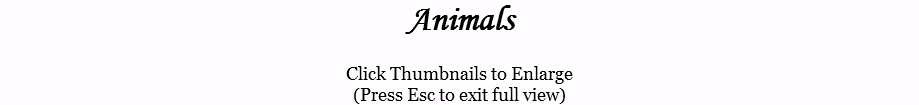 Animals Click Thumbnails to Enlarge (Press Esc to exit full view)
